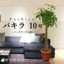 ★パキラ(10号)バークチップ付き【インテリア おしゃれ 人気 楽天 ...