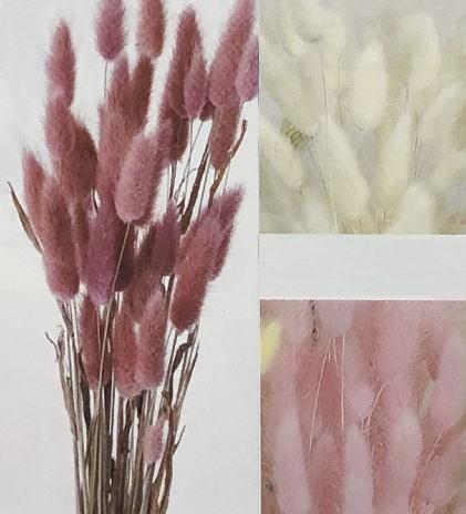 ラグラス 【ドライフラワー】花材 資材 材料
