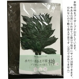 プリザーブドフラワー【榊1対】枯れない加工水やり不要本物の榊神棚仏様造花ではないプリさかき