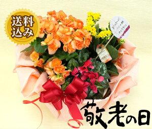 敬老の日 プレゼント に♪とびきり元気なお花をご用意♪敬老の日 プレゼント長〜く咲いてる♪生...
