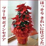 【送料無料・28%OFF】ポインセチア・赤【40センチ】白樺鉢カバー入り