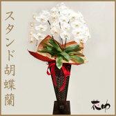 高品質 大輪 胡蝶蘭 3本立て 21輪以上 ホワイト 花鉢 スタンド胡蝶蘭【あす楽対応】【楽ギフ_メッセ入力】