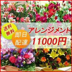 フラワーコンシェルジュが厳選した花屋のお祝いアレンジメント花 11000円 ...