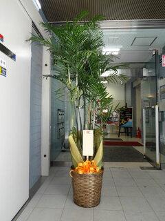 【観葉植物】フラワーコンシェルジュが厳選した花屋の観葉植物18000円無料ラッピング、メッセージカード付き