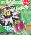 パッションフルーツの苗(接ぎ木苗) エドゥリス 赤紫実(4号)