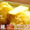 じゃがいも 種芋 種イモ  インカのめざめ 種芋10kg 北海道産 苗 種 ばれいしょ ジャガイモ 家庭菜園 苗 インカのひとみ