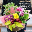 季節のおまかせ花鉢とグリーンの寄せ入れMサイズ フラワーバス