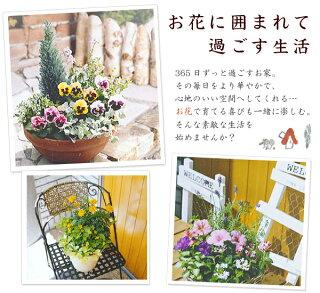 【送料無料】【6回コース】お花に囲まれる幸せ♪寄せ植えの会〜Let's 気軽に楽しくガーデニング☆【寄せ植えキット】