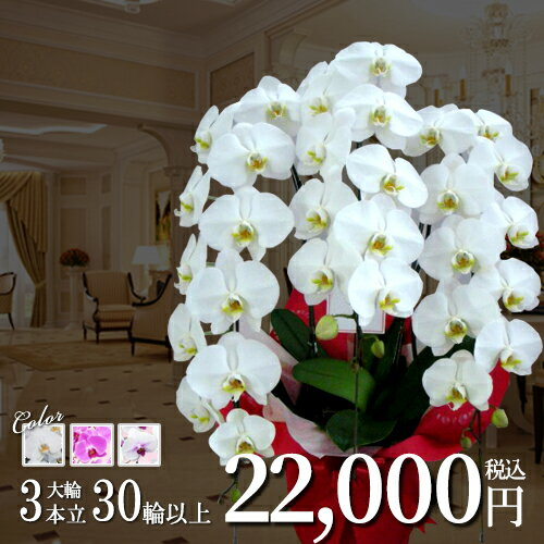 花・観葉植物, 鉢花  3 30 () 3 HLSDU RCP G12 S15