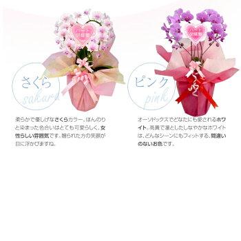 【送料無料】ハート胡蝶蘭ミディサイズ