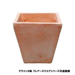 テラコッタ鉢 テラチーノ フレアースクエアポット 15×15 重さ:1.6kg (7045980)