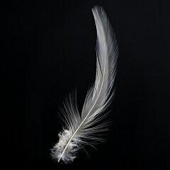首毛 オフホワイト 20本 5-12cm 装飾用の羽根 【フェザー アクセサリー パーツ 羽 …