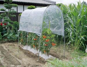 *雨よけ効果で収穫バッチリ! 家庭菜園の決定版(トマト、ナスなど) *【代引不可・配送日時指...