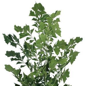 【人工植物】グリーンデコ鉢付クジャクヤシ1.9m
