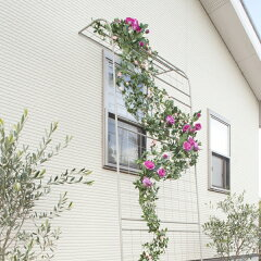 つるバラなどを誘引して壁面を飾る、花と緑のアーチ。EGラティス ウォールアーチ/RCP/05P01Jun14/