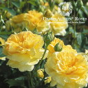 イングリッシュローズ −English Roses−【バラ苗】【David Austin / デビッド・オースチン】...