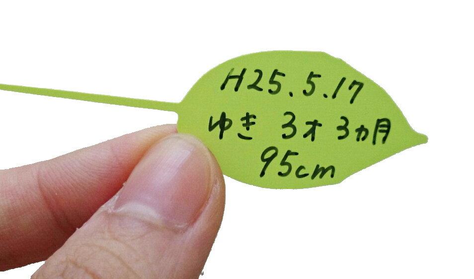 リーフ ウォールステッカー メモステッカー12枚 Lサイズ 身長計用