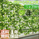 〈1年保証〉グリーンフェンス 3m グリーンカーテン グリーン カーテ...