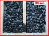 最高ランク黒玉砂利(彩光石)自然玉5分(15mm〜18mm)小袋800g