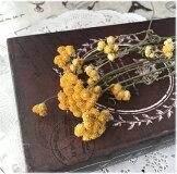 **丸葉ユーカリのドライフラワー☆ちょっとしたプレゼントやおうちに飾っても☆☆ハンドメイドの花材としても