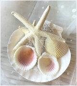 *SummerWedding*海のイメージ*キラキラ貝殻のSweetリングピロー☆デザインおまかせ