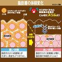 【送料無料】 桜香流 セルスルーエステ ウエストシェイプ 日本製 着るだけ シェイプアップ 脂肪燃焼 ダイエット 痩身 着圧 機能性 たるみ セルライト 脂肪 ひびかない マッサージ 痩せ スッキリ 脇腹 お腹 下腹 ヒップアップ 3