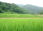 【送料無料】新米29年産新潟県佐渡産こしいぶき玄米20kg炊き上がりのツヤが良く、粘りがあり、コシヒカリに匹敵する食味を持っています。*北海道・九州区域は別途送料450円が掛かります。