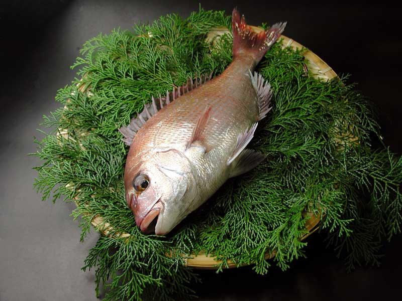 魚介類・水産加工品, タイ  600900g