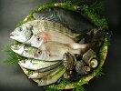 天然魚介類詰め合わせ