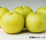 【ギフトに】晴富二十世紀梨