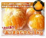 訳あり『おっきなむかん』1kg 外皮をむいた冷凍みかん 熊本県産不知火使用 むかん 冷凍みかん ミカン 不知火 しらぬい 熊本県産 デザート スイーツ フルーツ シャーベット 果物 プチギフト 内祝い