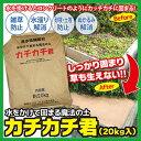 【直送品】【代引き不可】【送料無料】水をかけて固まる魔法の土 カチカチ君 約20kg×1袋