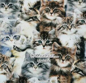 USAコットン 「CAT.cat.cat..」 /「WINDHAM FABRIC」/生地/布/綿/猫柄/猫/キャット/輸入生地/いぬ/ネコ/骨/リアルキャット/
