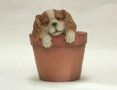 【置物】いねむり小犬 キャバリア・スパニエル(BJ-349)[g1][Gardening園芸と土 刀川平和]