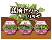 栽培セット「サラダ野菜(3種類入り)」[g1.5]