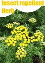 虫よけハーブ 12種の虫が嫌いなハーブセット ハーブガーデン テーマ別ハーブ苗おまかせセット 12種 9vp×12ポット Incect Repellent Herb 害虫忌避 ハーブ苗専門店