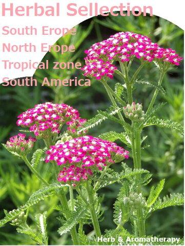 「原産地2地域選んでハーブ苗おまかせ24種セット」ハーブガーデンをつくろう♪ Herb Garden