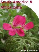 「南アメリカとアフリカのハーブ12種セット」ハーブ苗おまかせ12種セット9vp×12ポットHerbsoftheSouthAmerica&Africazone