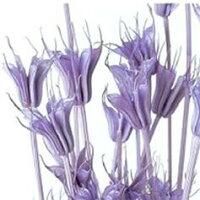 ニゲラオリエンタリス ライトパープル ハーバリウム 花材