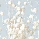 大地農園/リンフラワー 25g 白/35010-011 プリザーブドフラワー 花材 小花 大地農園:小花 リンフラワー
