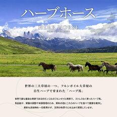ハーブホース世界の三大草原の一つ、フルンボイル大草原の自生ハーブで育まれた「ハーブ馬」