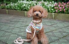 首輪とリードセットサドルレザー小型犬中型犬用ヌメ1.5cm幅