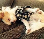 小型犬の服ブラックフード付きシャツ
