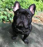 ハーフチョーク大型犬中型犬用2cm幅