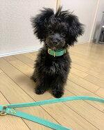 小型犬中型犬の首輪とリードセット1.5cm幅リードと首輪カラーレザーターコイズ1.5cm幅