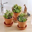 【日比谷花壇】 多肉植物「寄せ植え3個セット」 おしゃれ インテリア