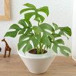【日比谷花壇】【ネット限定】お手入れかんたん観葉植物「ヒメモンステラ(ホワイト)」