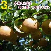 【山之上ブランド】朝取り完熟梨福田稔農園3kg(5玉〜7玉)