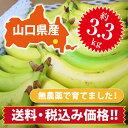 【ひかりバナナ】3.3kg 約18〜25本 国産バナナ バナナ 国産 ひかりバナナ もんげーバナナ