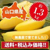 【ひかりバナナ】1.3kg 国産バナナ バナナ 国産 ひかりバナナ もんげーバナナ 無農薬 フルーツ スムージー 自宅用 お歳暮 ギフト おいしい 取り寄せ